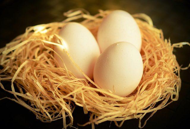 Proses pengerraman telur biasanya berlangsung selama kurang lebih 21 hari lamanya