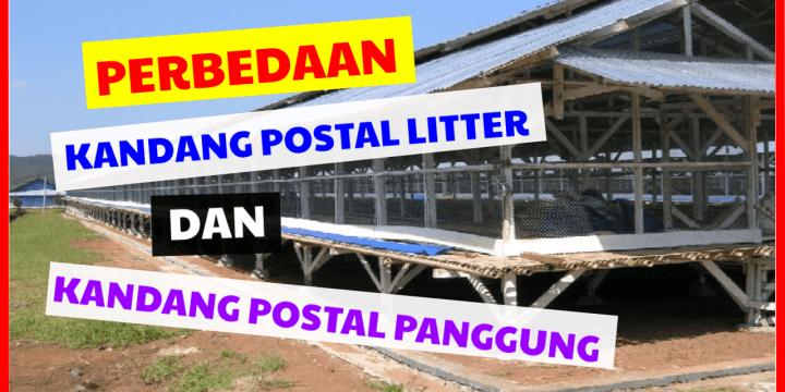 SIMAK!! Perbedaan Kandang Postal Litter & Kandang Postal Panggung ?