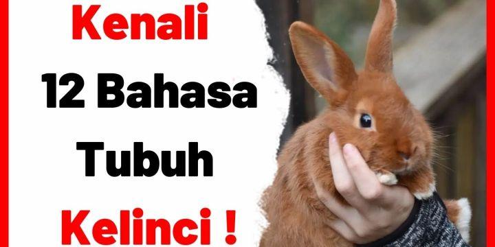 Anda Suka Kelinci?, Kenali 12 Bahasa Tubuhnya !