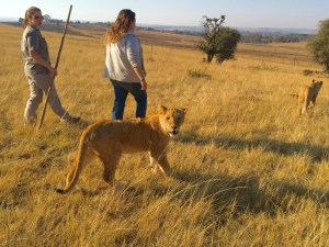 Walking-with-the-lions-South-Africa-Johannesburg