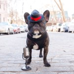 Hoboken Dogs Channeling Their Inner Frank Sinatra