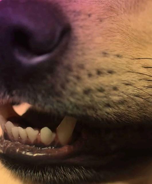 Make Dogs Stop Barking