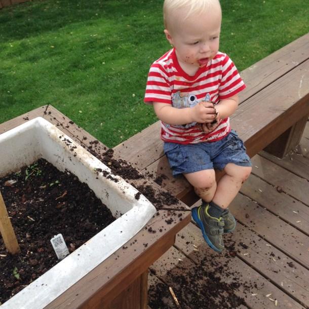 beau digging planter