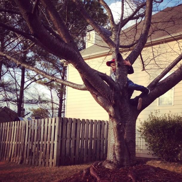 jm climbing tree