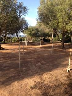 Hochzeitsplanerin heiratet Mallorca freie Trauung Olivenhain