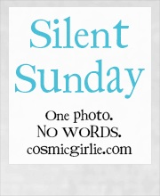 silent sunday badge