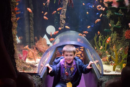 Discovering our Blue Planet at SEA LIFE Manchester