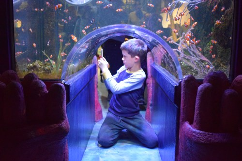 Days Out: National SEA LIFE Centre Birmingham
