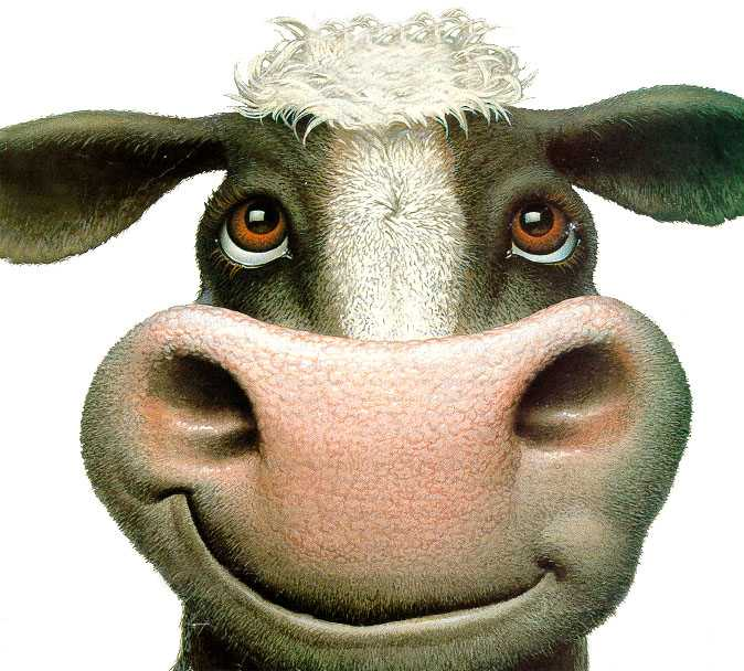 cow-look-up.jpg