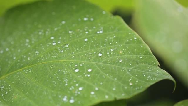 水滴で潤っている葉