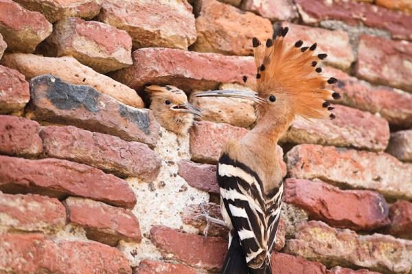 Incredible India Wildlife
