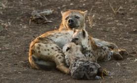 2011_07_27_Kruger_National_Park_1327