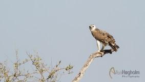 2011_07_28_Kruger_National_Park_1446