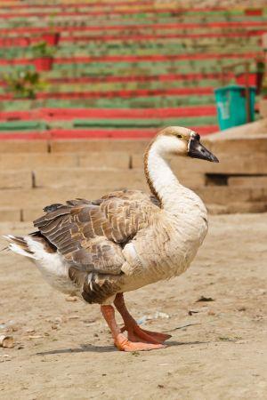 2011_03_15_Varanasi_361.jpg
