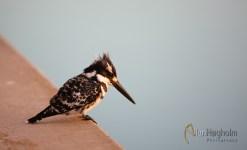 2011_07_31_Kruger_National_Park_2231