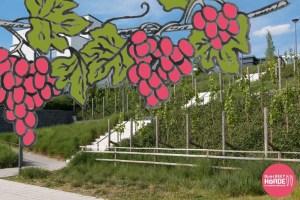 Wein in Hörde anbauen