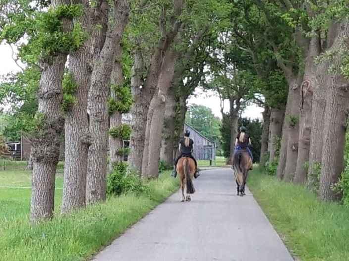 Paard mee op vakantie Drenthe