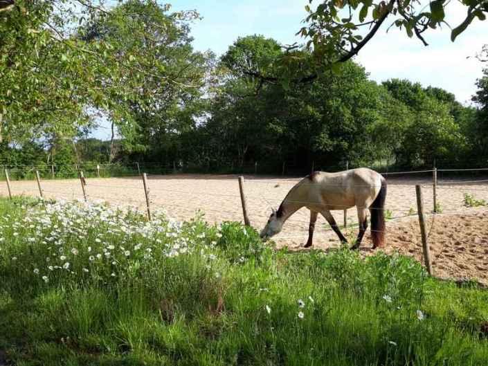 Rijbak Hoeve Heide en Wold