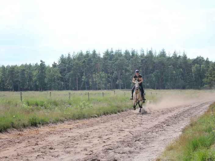 Paardrijden Drenthe