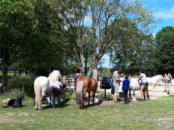 Vakantiehuis met paardenstalling Drenthe