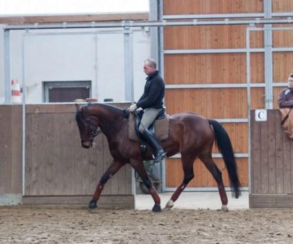essinghausen_pferd_dressur_7 Dressurlehrgang mit Rolf Grebe RG-Hof-Höherhaus  Rolf Grebe Dressur Lehrgang
