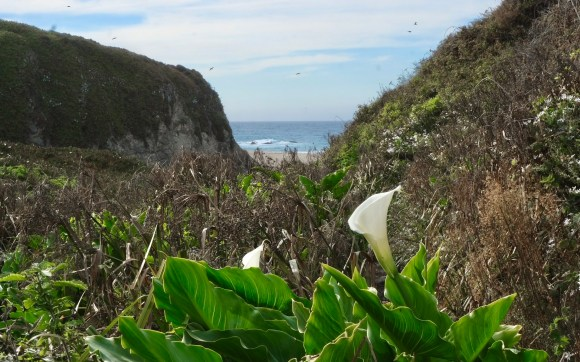 The calla lilies weren't out in November, except for a few stragglers.