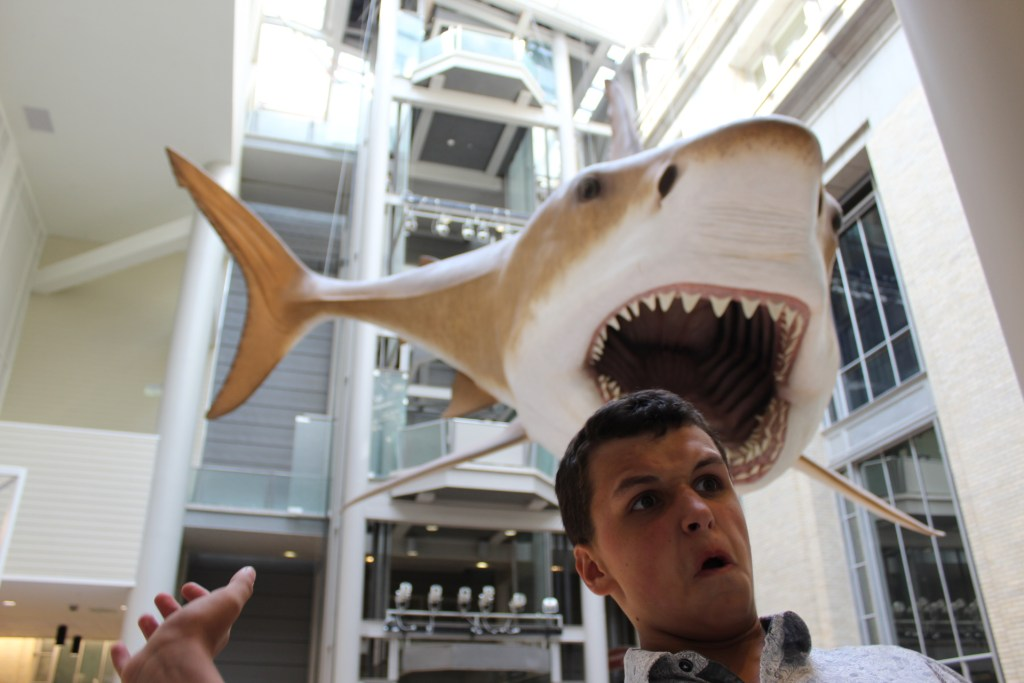 Parker prepares to be eaten by an ancient shark at the Natural History Museum in Washington D.C.  Beat the crowd there.