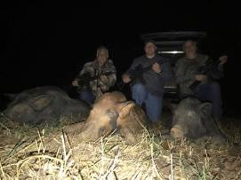 KillPic6-3hogs-3guys