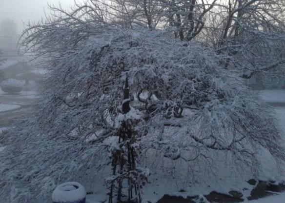 whitechristmas2012