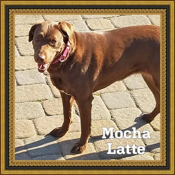 Mocha Latte | HOH Adoptables