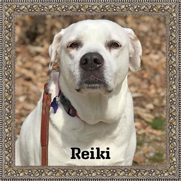 Reiki   HOH Adoptables