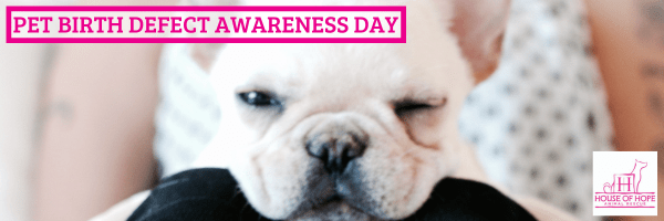 Pet Birth Defect Awareness Day
