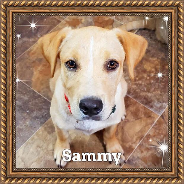 Sammy - Adoptable HOH Dog