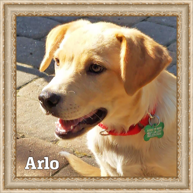 Arlo - Adoptable Dog