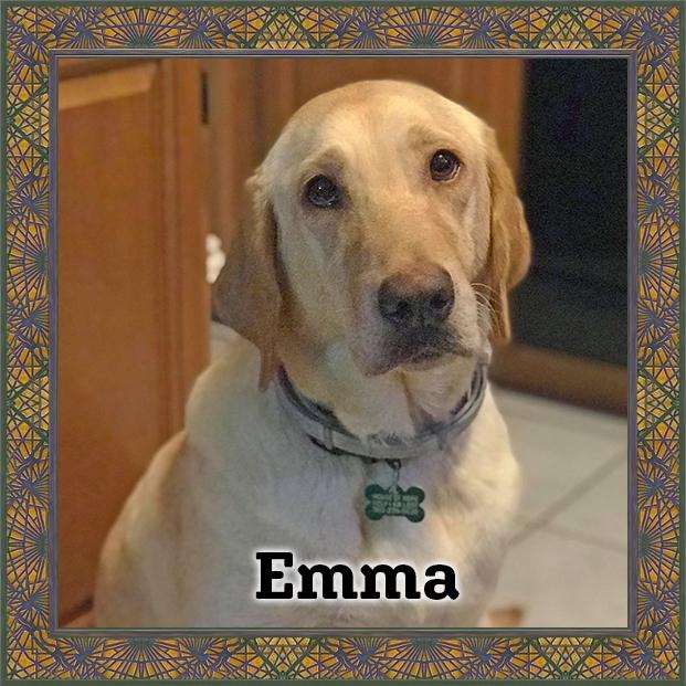 Emma - HOH Adoptable Dog