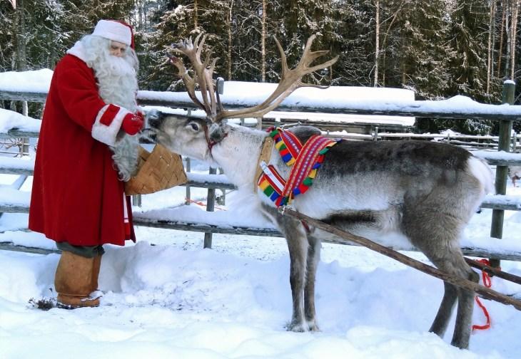 finlandiya'da ren geyiği beslemek