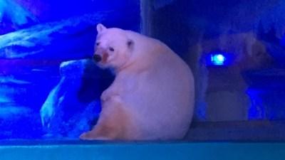Urso polar num centro comercial em Guangzhou