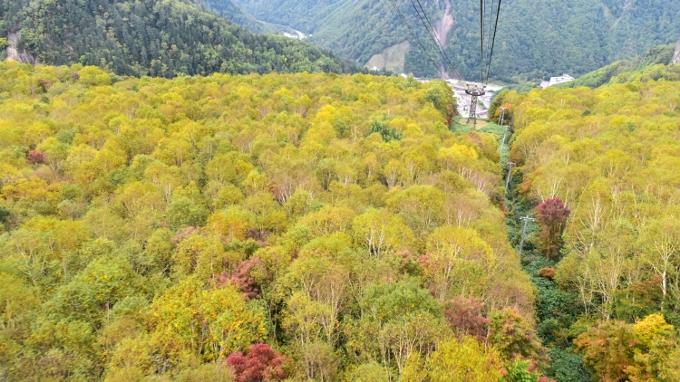 黒岳の紅葉の景色が素晴らしかったです!黒岳ロープウェイ【上川町】