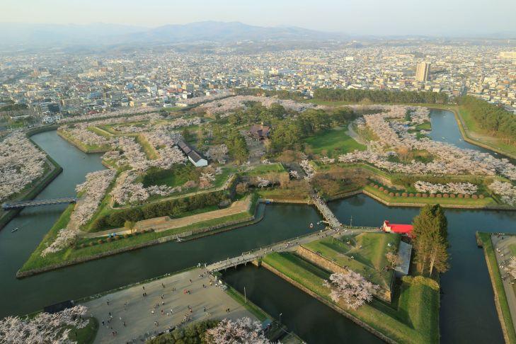 五稜郭公園の見事な桜の景色/函館市