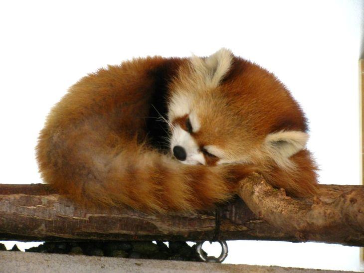 円山動物園に行ってきましたよ【札幌市中央区】