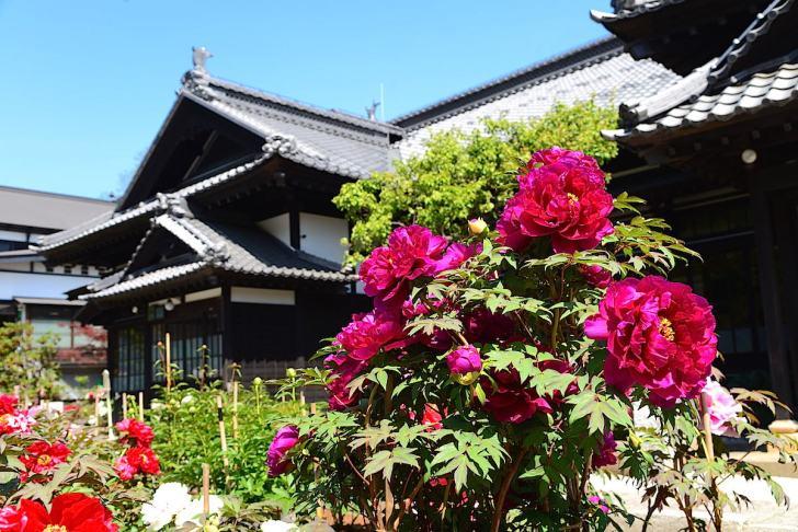 ニシンで財を成した青山家が大正6年から6年半余りの歳月をかけ建てた別荘が旧青山別邸