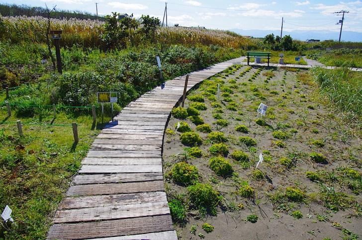 50種の植物が植栽される観察園を併設