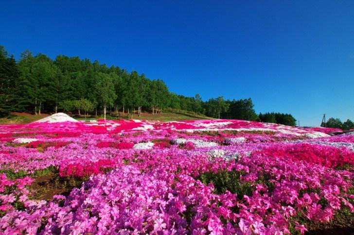 三島さんの芝ざくら庭園