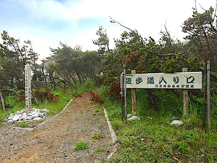 クロマツ林遊歩道