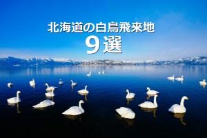 北海道の白鳥飛来地