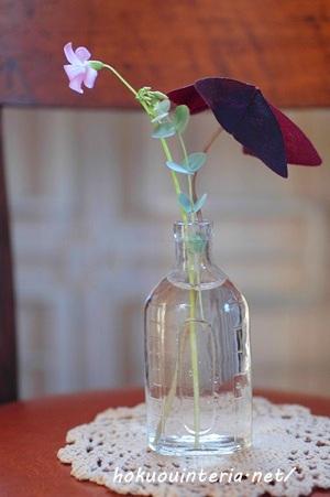 紫クローバー