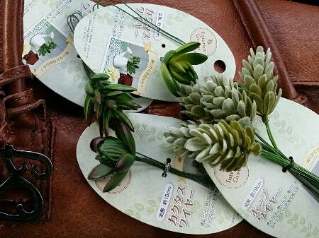 100均セリアの多肉植物
