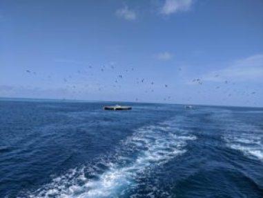 澳洲打工度假-大堡礁出海
