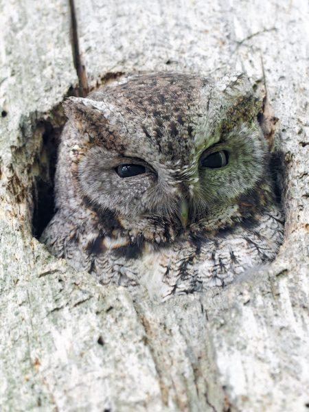Nesting in the tree cavity