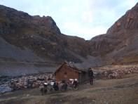perfekt: Campen mit Rambo dem Wolf